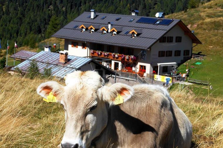 Rifugio Capanna Passo Valles